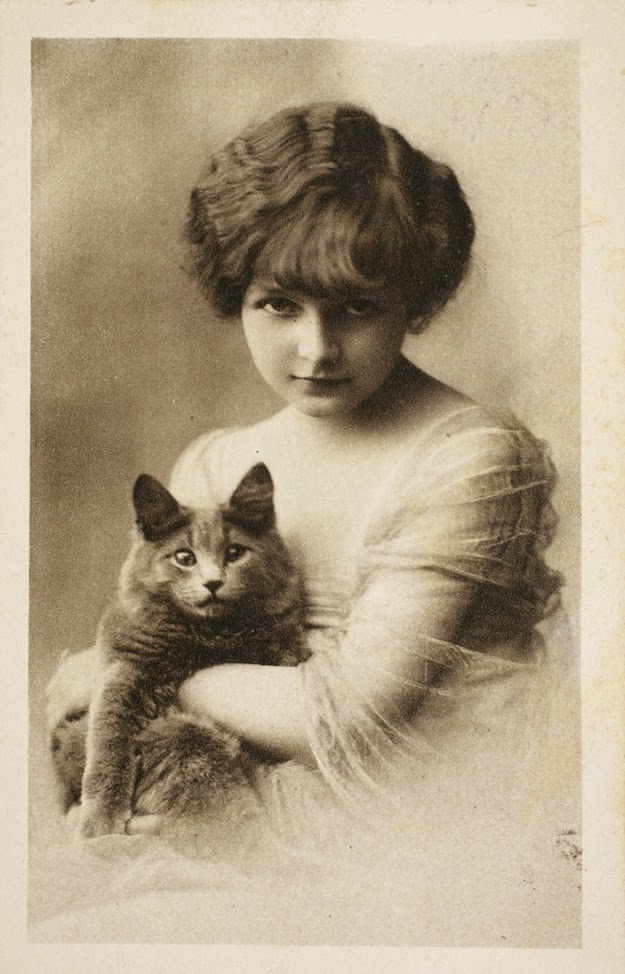 Vintage Cat Photos 100