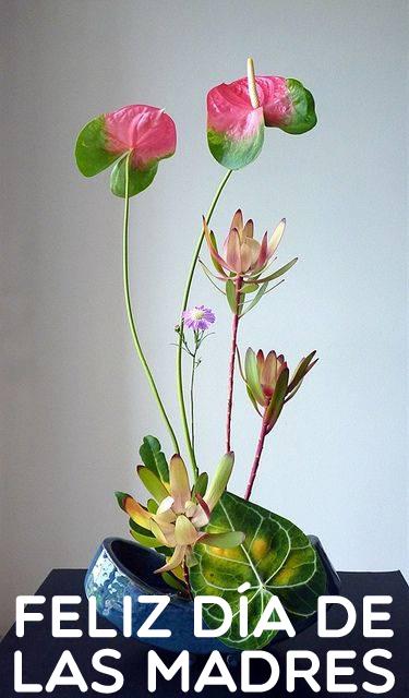 Banco De Imágenes Gratis Arreglos Florales Y Ramos De Flores Para