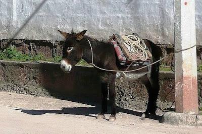 yo pedí una mulata, no una mula atá