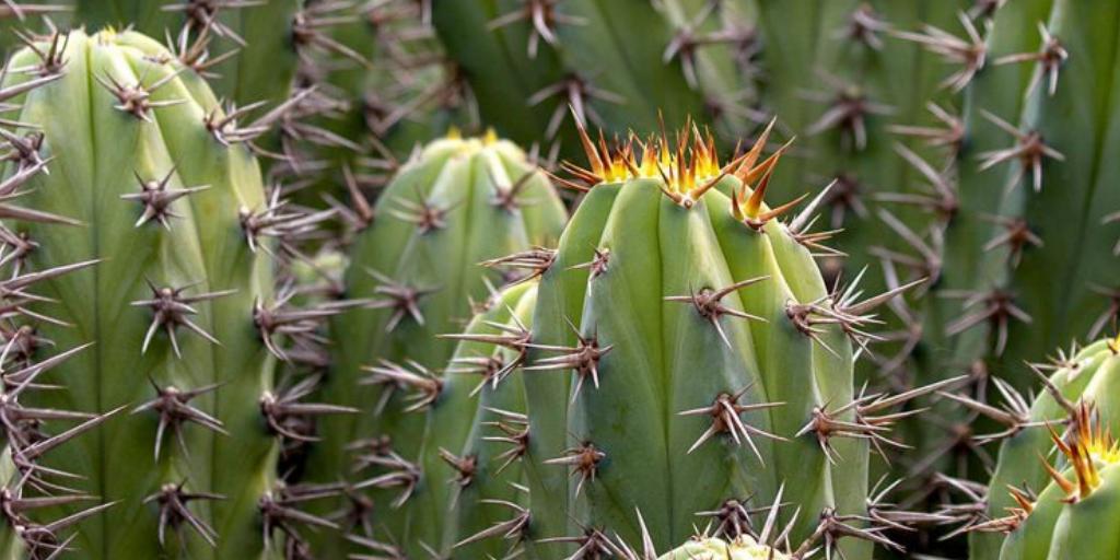 Hermosos cactus salvajes