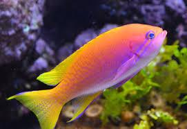 دراسة جدوى فكرة مشروع تربية أسماك الزينة فى مصر 2019
