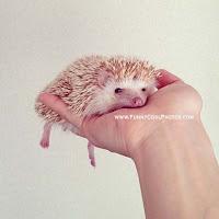 Cute Loving Animals