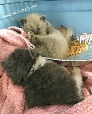 Three kittens sleeping in a pile