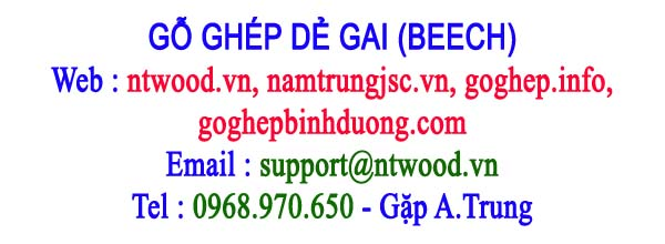 gỗ ghép dẻ gai Beech