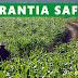 Governo libera Garantia-Safra para agricultores do Ceará