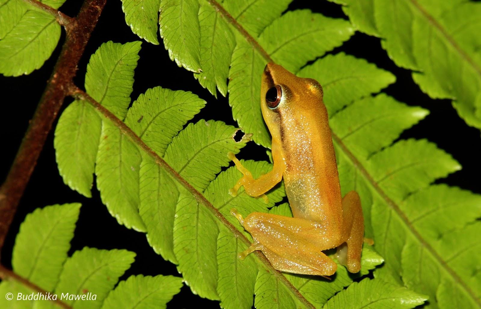 research paper amphibians