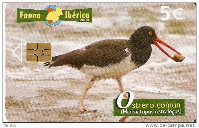 Tarjeta telefónica Ostrero común (Haematopus ostralegus)