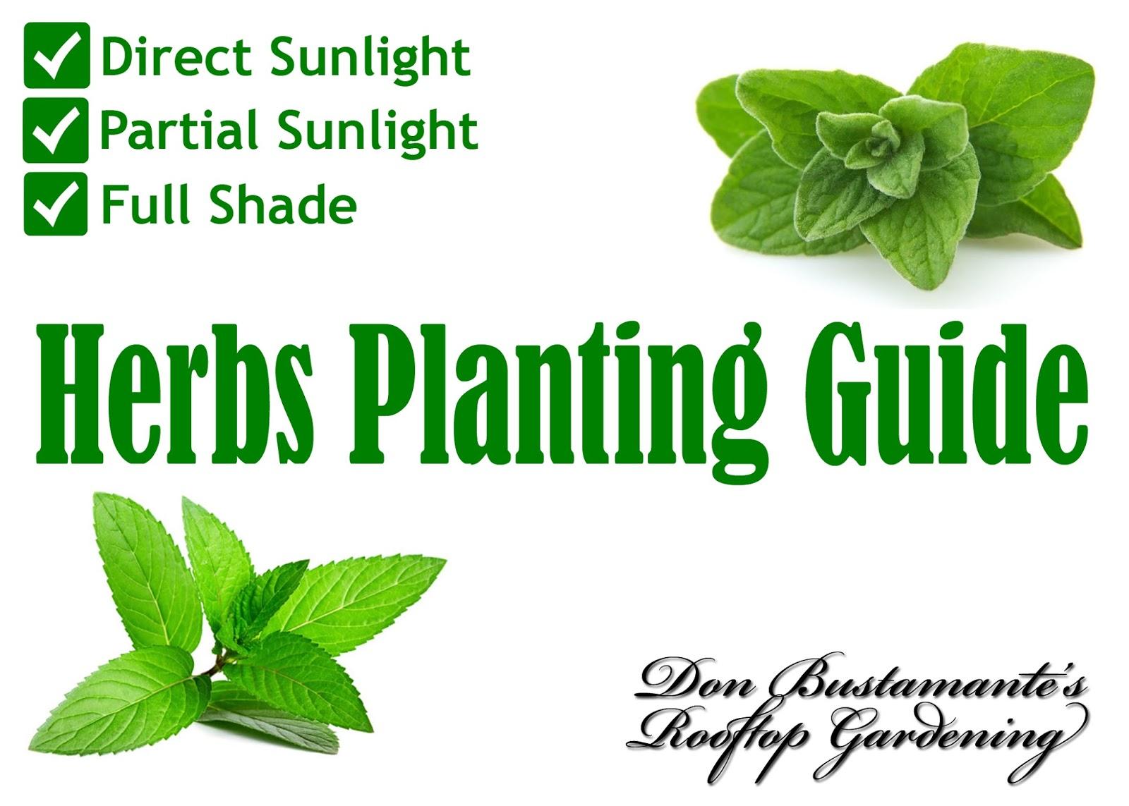 Don Bustamante's Rooftop Garden: Herbs Planting Guide