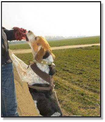 so macht das Training mit Hund Spaß