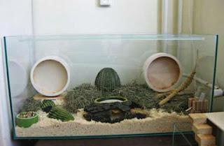 Kandang Hamster Akuarium