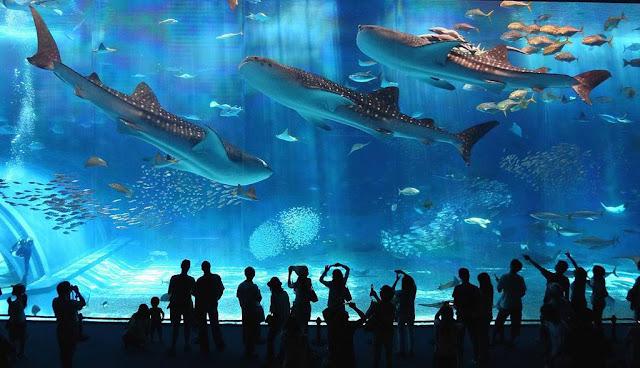 Wisata Unik di Akuarium Osaka Kaiyukan