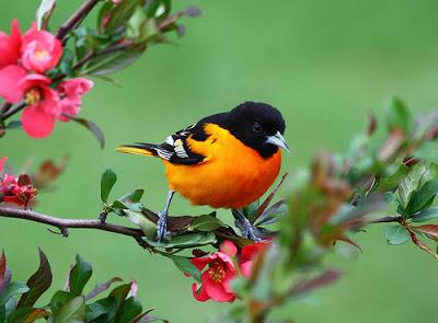 Resultado de imagem para pássaros