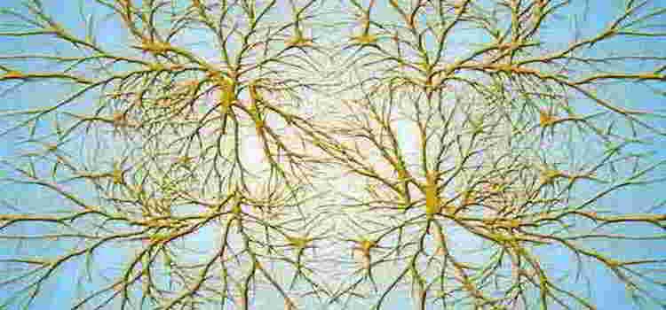 Keajaiban Tubuh dan Sel Saraf Otak Manusia