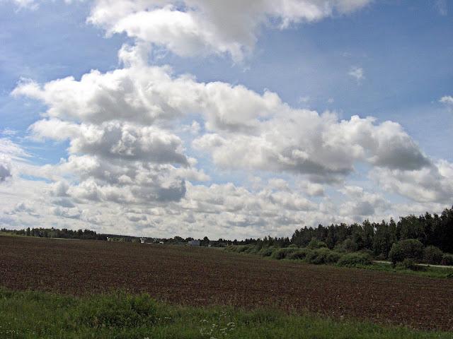 поле кормовая кукуруза