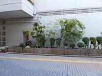 ひらかた菊花展 (枚方市役所周辺)