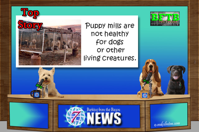 BFTB NETWoof News top story about Puppy Mills