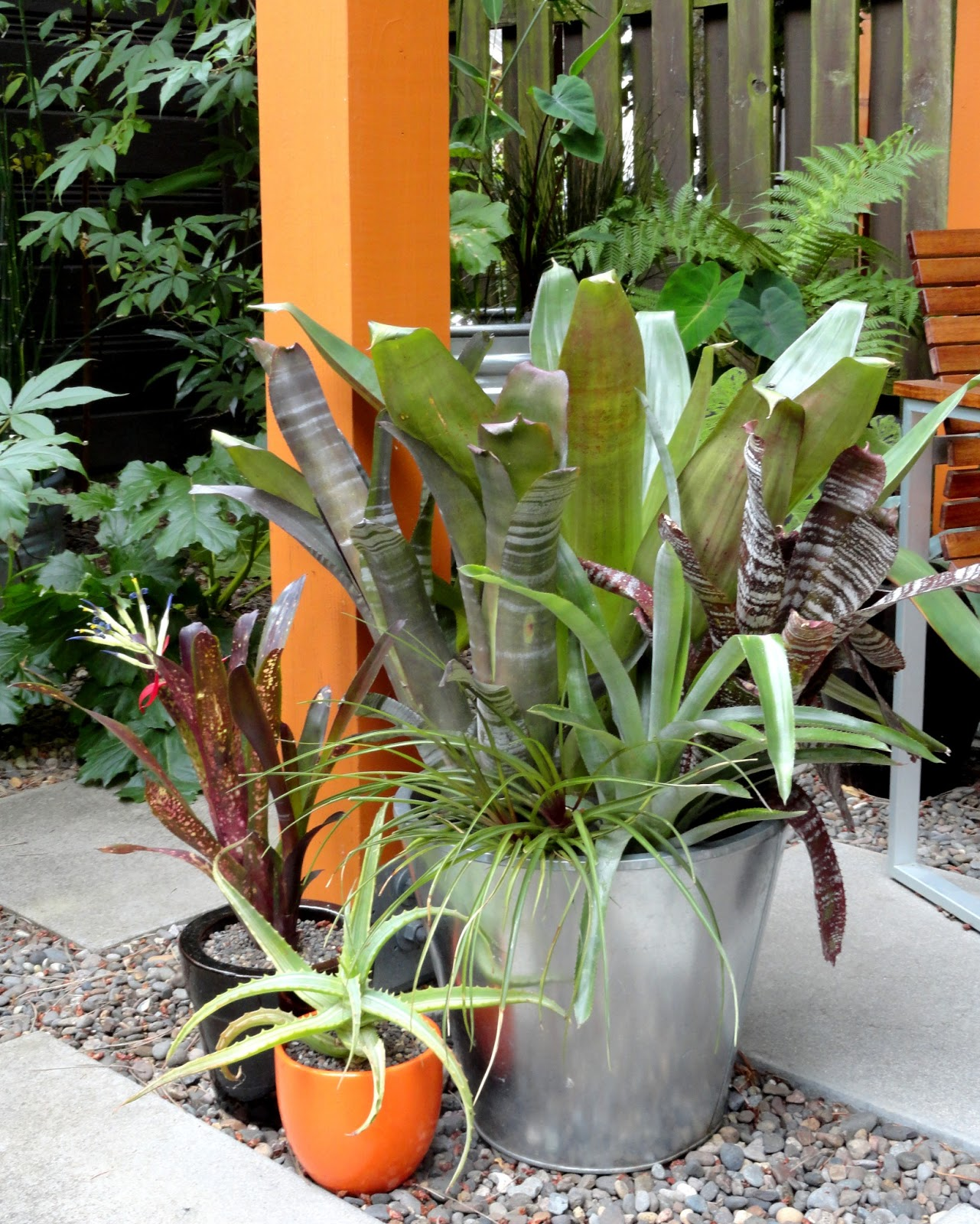 One Of The Many Things I Found Myself Wishing For While In San Francisco Was A Climate Where Could Grow Bromeliads Outdoors Year Round They Can T
