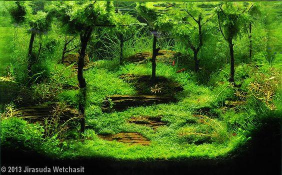 hồ thủy sinh rừng cho hồ có kích thước trung bình