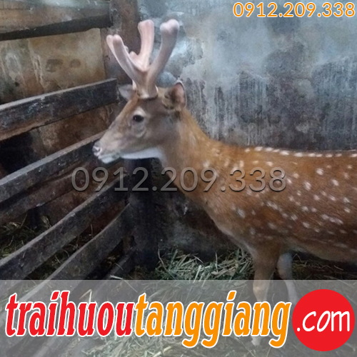 Trang trại hươu sao Tăng Giang