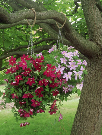 Lilsparklies Beautiful Hanging Baskets