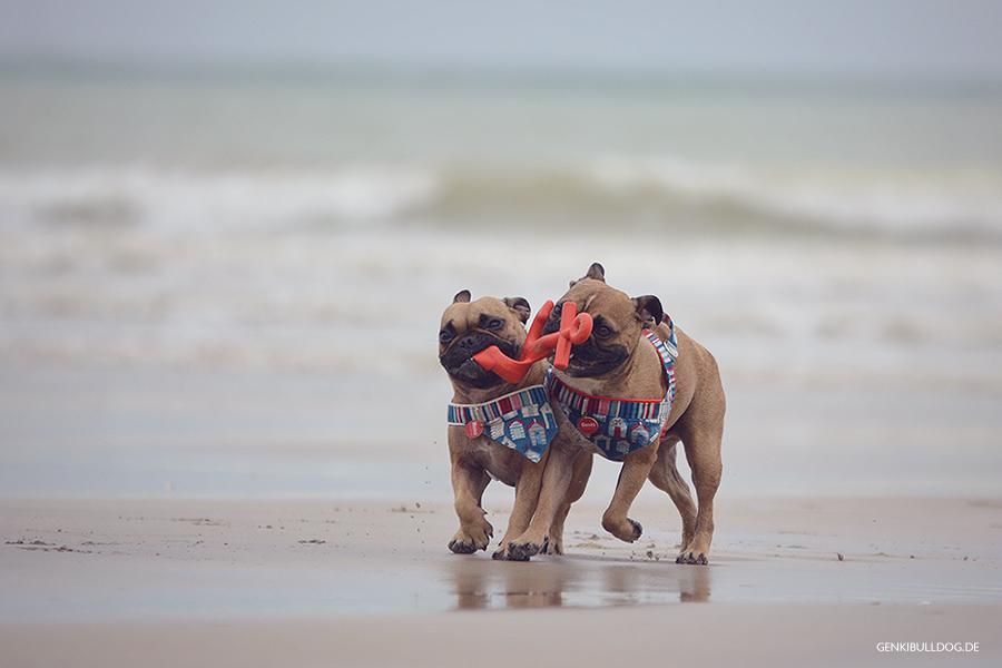 Hundeblog GenkiBulldog in der Normandie Varengeville-sur-Mer