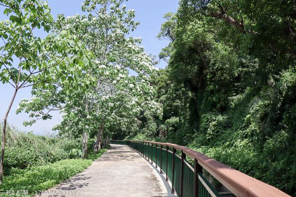 台中外埔|2019水流東桐花步道|高鐵觀景台|賞桐花近距離觀賞高鐵呼嘯而過