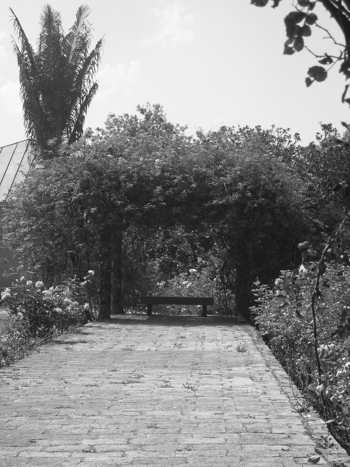 Imago y jard n bot nico en blanco y negro 2016 for Sanse 2016 jardin botanico