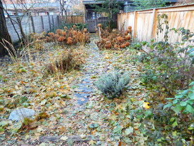 Cabbagetown Toronto Fall Backyard Garden Cleanup before by Paul Jung Gardening Services