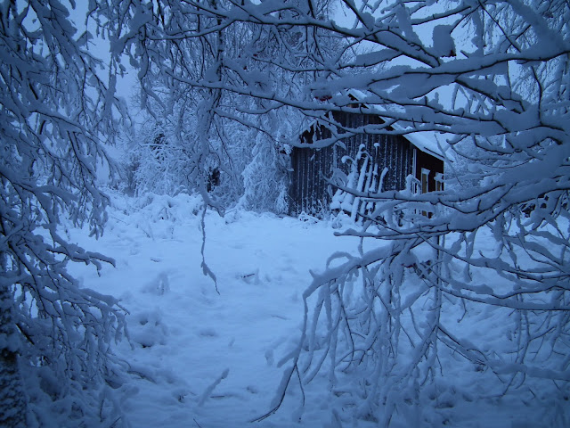 kotipiha, lumi, marraskuu, Karintie