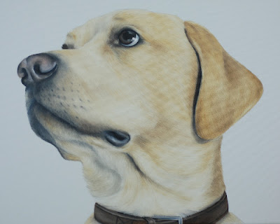 Pet Portrait Labrador Oil on canvas