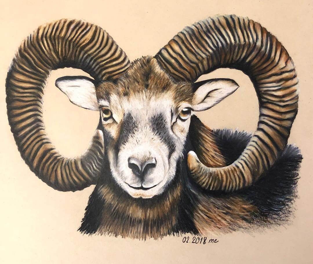 06-Ram-Eichenberger-Rodriguez-Colored-Wildlife-Drawings-www-designstack-co
