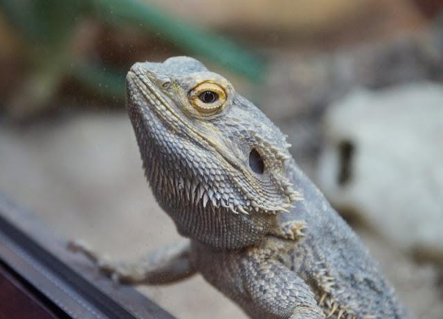 Frühling im Tierpark Gettorf (+ Verlosung). Im Frühling findet im Tierpark eine Reptilienausstellung statt.