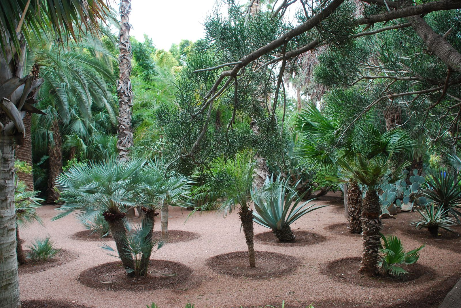 specimen palms at majorelle gardens