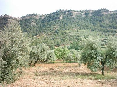 La pileta, camino, pantano de Pena, embalse, finca, almendros, olivos 17