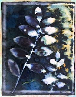 Wet cyanotype_Sue Reno_Image 364