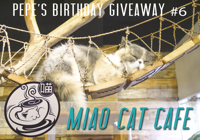 The Final Birthday Giveaway: Miao Cat Cafe!
