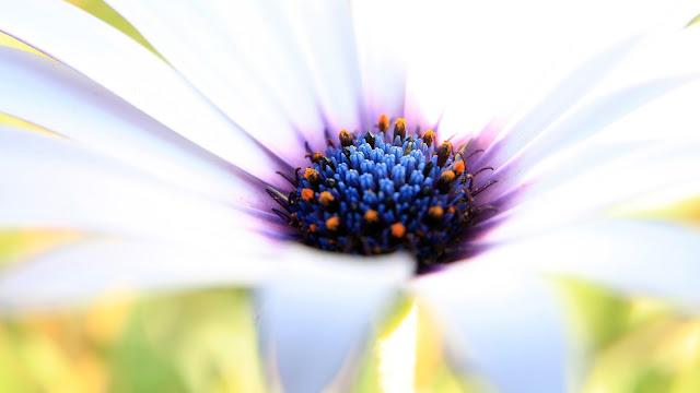 Papel de parede da natureza Flor Branca em hd 1080p. Download flower wallpapers and flower Desktop backgrounds, images in HD widescreen high quality resolutions for free.