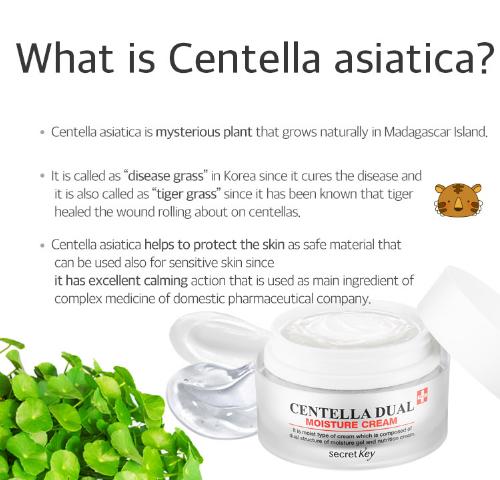 Ceantella Dual Moisture Cream
