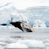 Whales of the Antarctica and the Arctic