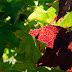 Dove andare per fotografare i colori dell'autunno