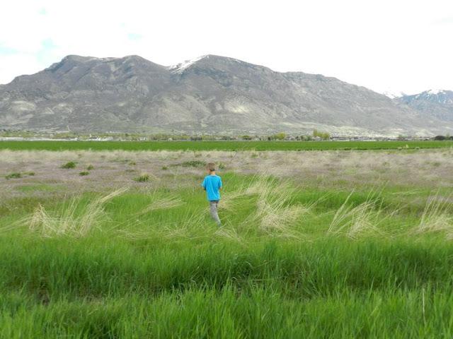 American Fork, UT alfalfa fields: growcreative