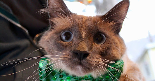 Cats in bowties (Just in time for St. Patrick's Day!)