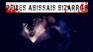 Os peixes mais assustadores já vistos no fundo dos Mares