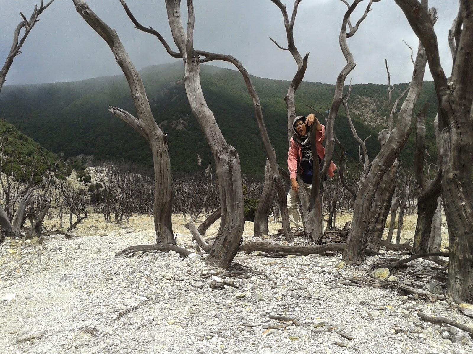 pohon tidak berdaun di hutan mati membuat terik langsung masuk ke otak
