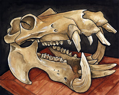 hipposkull.jpg