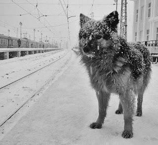Брошенные собаки фото