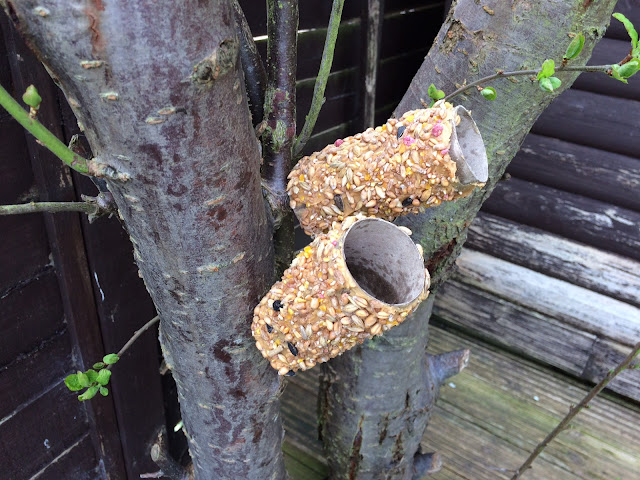 The bird feeders on a tree