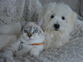 Mengapa hanya anjing dan kucing saja yang didomestikasi?