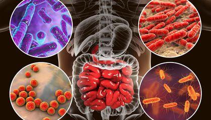 المتعارف عليه أن الجسم يحتوي على  ميكبروبات مفيدة وأخرى سامة