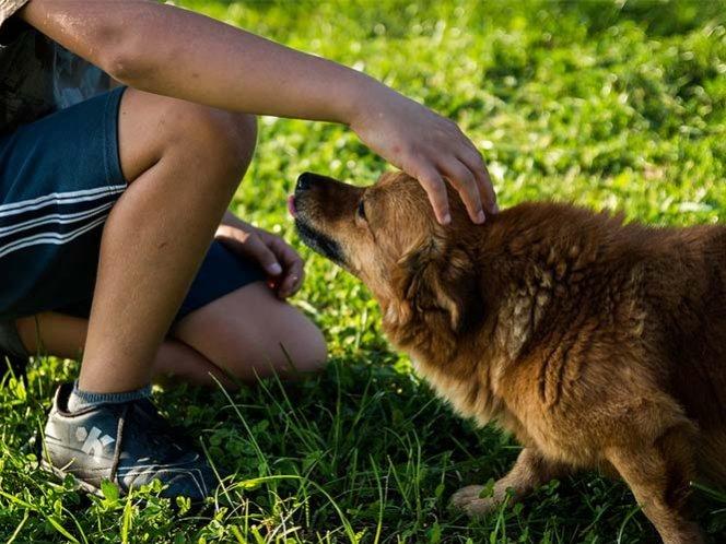 Niños se llevan mejor con sus mascotas que son sus hermanos: Estudio